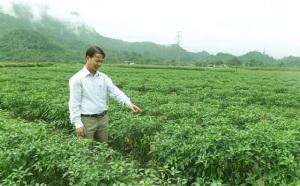 Đột phá chuyển đổi cây trồng