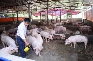 Chế phẩm sinh học giảm mùi hôi chuồng trại chăn nuôi