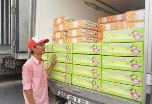 Sóc Trăng: Cấp mã số cho vùng sản xuất cây ăn trái đặc sản theo VietGAP