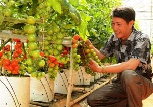 Cung cấp 300.000 tấn nông sản cho thị trường Tết