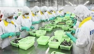 Trò chuyện với doanh nhân – TS Hồ Quốc Lực, Tổng Giám đốc Cty CP Thực Phẩm Sao Ta: Đầu tư phát triển ngành hàng tôm, cơ hội và khó khăn…