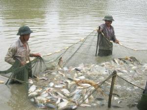 Cải tạo hạ tầng thâm canh thủy sản
