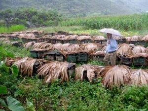 6 kiến nghị của Hà Giang về phát triển đàn ong