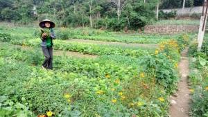 Nông nghiệp hữu cơ: Thị trường, thách thức và giải pháp
