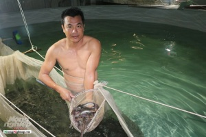 Công nghệ nuôi cá chình hoa thu hoạch 70kg/m3 nước