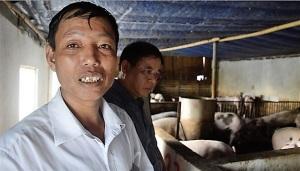 Liên kết chuỗi, giảm giá thành sản xuất lợn