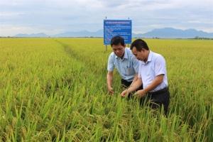 Chuyển đổi đất lúa kém hiệu quả, nhân rộng các chuỗi giá trị