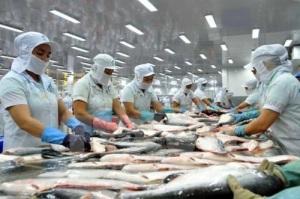 Quy định mới liên quan đến XK cá bộ Siluriformes vào Mỹ