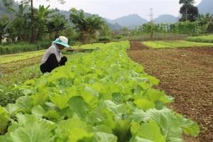 Hào hứng trồng rau an toàn