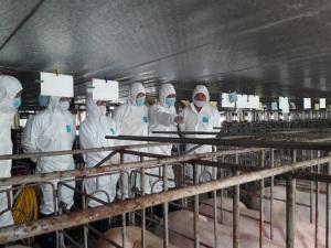 Trang trại chăn nuôi lợn an toàn sinh học chiếm 25,6%