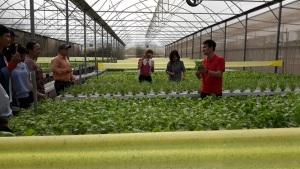 Thăm các mô hình trồng rau công nghệ cao
