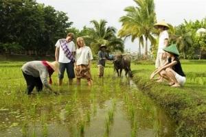 Phát triển du lịch nông thôn - giải pháp căn cơ nâng cao giá trị sản xuất nông nghiệp