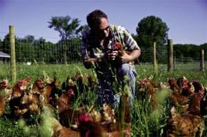 Phúc lợi động vật để chăn nuôi bền vững