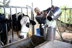 Ông Phạm Văn Đông, Cục trưởng Cục Thú y: Cơ hội lớn cho ngành sữa Việt Nam
