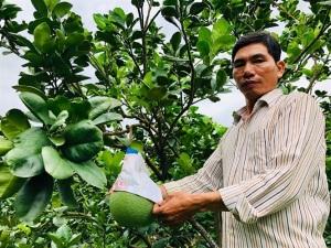 Sản xuất trái cây truy xuất nguồn gốc: Nhà vườn đồng loạt... chạy