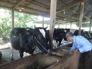 Khẩn trương chuẩn bị xuất khẩu sữa sang Trung Quốc