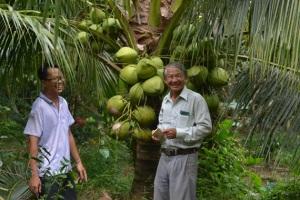 Liên kết trồng dừa thơm Island