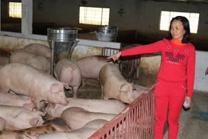 Những tỷ phú nông dân vùng Kinh Bắc