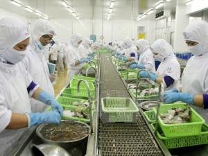 Cà Mau mở rộng thị trường xuất khẩu tôm