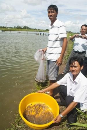 Hợp tác nuôi tôm, lợi nhuận tăng vọt từ 1 tỷ lên 6,75 tỷ đồng