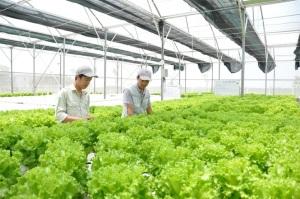 Bắc Ninh: Chuyển đổi 1.000ha đất lúa sang cây trồng khác