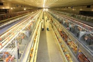 Bắc Ninh quy hoạch chăn nuôi tập trung công nghệ cao