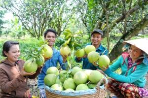 Liên kết sản xuất trái cây giá trị cao
