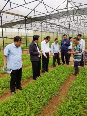 Long An: Hướng đến sản xuất rau sạch hàng hóa