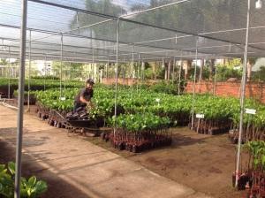 Nghề ươm cây giống ăn nên làm ra, có người thu tiền tỷ/năm