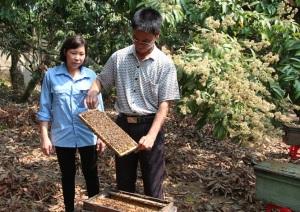 Bội thu mùa lấy mật, nghề nuôi ong du mục năm nay khấm khá