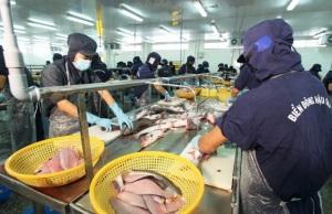Khắc phục vi phạm trong ngành cá tra