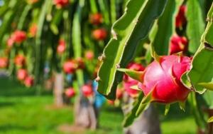 Nông sản Việt sau EVFTA: Chủ động nhưng không chủ quan