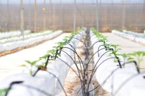 Phát triển nhờ nông nghiệp sạch