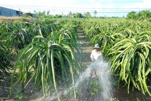 Sản xuất trồng trọt chuyển biến tích cực