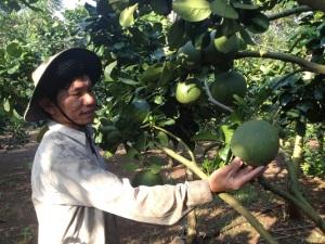Đồng Nai: 283ha cây trồng được cấp chứng nhận GAP