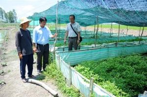 Những mô hình nuôi lươn không bùn kết hợp trồng rau thủy canh lợi nhuận cao