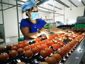 Đã mắt với trang trại trứng gà sạch đầu tư trăm tỷ vẫn có lãi
