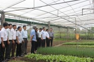 Hoàng Mai phát triển vùng chuyên canh rau thập tự