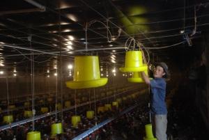 Trang trại nuôi gà khép kín có một không hai ở Quảng Ngãi, lãi 1 tỷ đồng/năm