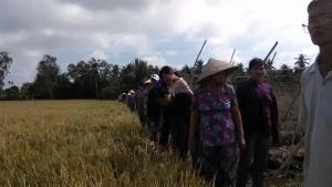Sản xuất lúa gạo bền vững