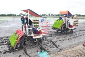Hiện thực hóa giấc mơ đại điền để sản xuất chuỗi lúa gạo sạch công nghệ cao