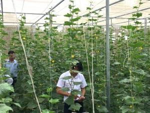 Bình Định làm nông nghiệp 4.0