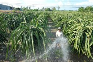 Phân sinh học cải tạo đất cho vườn cây ăn trái