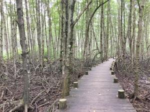 Phát huy sức mạnh tổng hợp để bảo vệ rừng