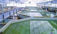 Ứng dụng công nghệ cao vào nuôi trồng thủy sản