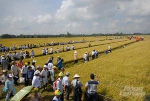 An Giang hướng tới phát triển nông nghiệp hiện đại, bền vững