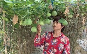 Đẩy mạnh sản xuất nông nghiệp theo hướng VietGAP
