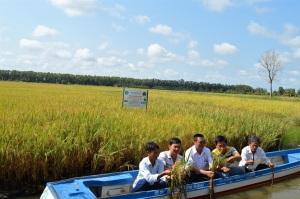 Liên kết sản xuất, tiêu thụ lúa - tôm hữu cơ