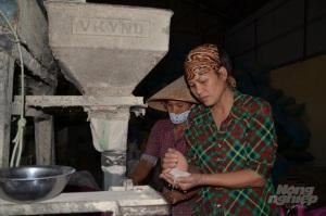 Sản xuất lúa Nhật (Japonica) theo chuẩn VietGAP