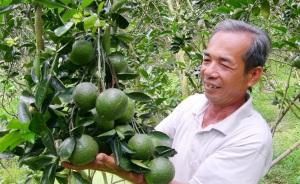 Quản lý dịch hại cây ăn trái vào mùa khô